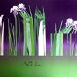 Iris, 2017, huile sur toile, 121, 9 x 121, 9 cm