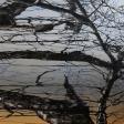 Tilleul 03, 2017, huile sur toile, 121, 9 x 91, 4 cm