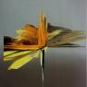 Sans titre, 2018, huile sur toile, 50, 8 x 40, 6 cm