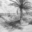 Vue de Djerba (bord de route), 2007, fusain sur papier, 50 x 60 cm