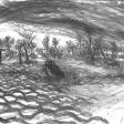 Vue de Djerba (palmeraie), 2007, fusain sur papier, 50 x 60 cm