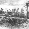 Vue de Djerba (cactus), 2007, fusain sur papier, 50 x 60 cm