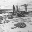 Vue de Djerba (tronc brûlé), 2007, fusain sur papier, 50 x 60 cm