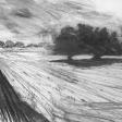 Vue de Djerba (olivier et vent de sable), 2007, fusain sur papier, 50 x 60 cm