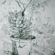 Plantes graces 1, 2006, encre sur papier, 60 x 50 cm