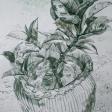 Plantes graces 2, 2006, encre sur papier, 60 x 50 cm