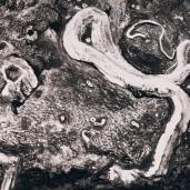 Coquillage 2, 2007, fusain sur papier, 60 x 100 cm