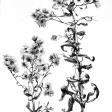 Herbes (étude), 2006, encre sur papier, dimensions perdues