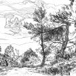 Forêt, Aude, 2006, encre sur papier, 21 x 30 cm