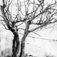 Pommier, 2006, encre sur papier, 21 x 30 cm