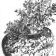 Nature morte, 2006, encre sur papier, 30 x 21 cm